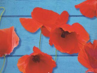 Donne che comprano fiori Vanessa Montfort Recensione UnLibro