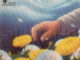 L'ESTATE INCANTATA, di Ray Bradbury Recensioni Libri e News UnLibro