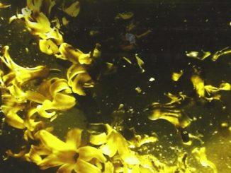 Yellow birds Kevin Powers Recensioni Libri e News UnLibro